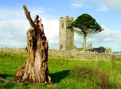 Heritage and planning - The Hill of Slane with tree stump in foreground and ruin in background