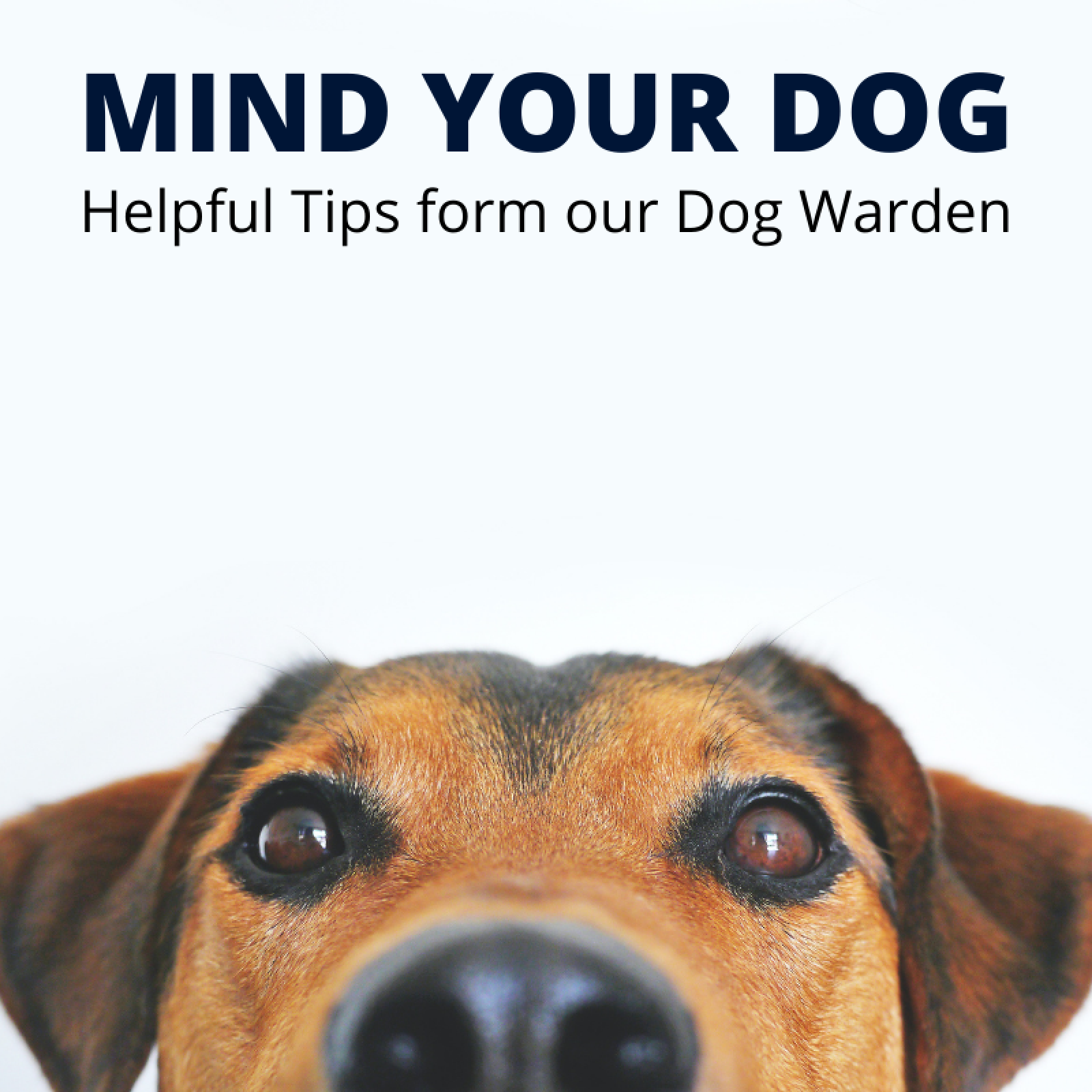 Mind your Dog