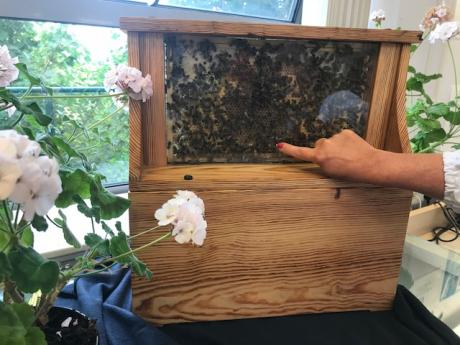 Busy as bees Dunboyne Library hive